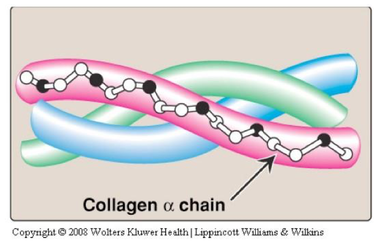 Illustration of the triple helix structure of a collagen strand